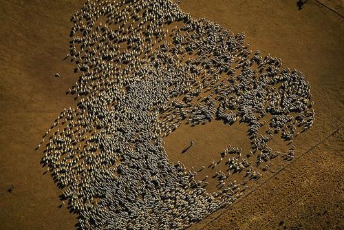 Foto de La tierra desde el cielo - © Yann Arthus-Bertrand (7/37)