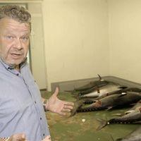 Chicote fue testigo de la mayor operación contra el fraude de atún rojo del mundo: todo lo que debes saber