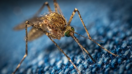 Liberar 750 millones de mosquitos modificados genéticamente, el plan de Florida para frenar la transmisión de enfermedades