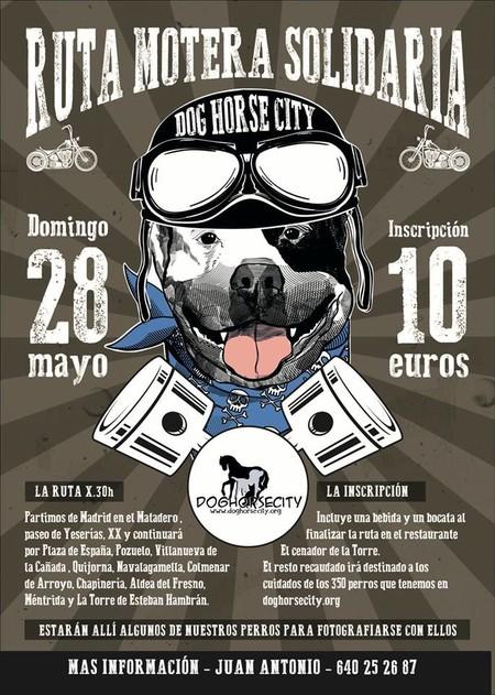 Dog Horse City 1