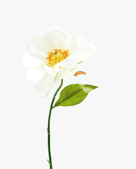 Peonia Artificial