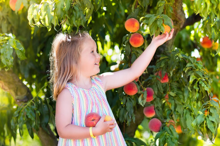 frutas