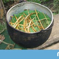 """¿Puede la """"planta sagrada"""" amazónica, la ayahuasca, ayudar contra la adicción y la depresión?"""