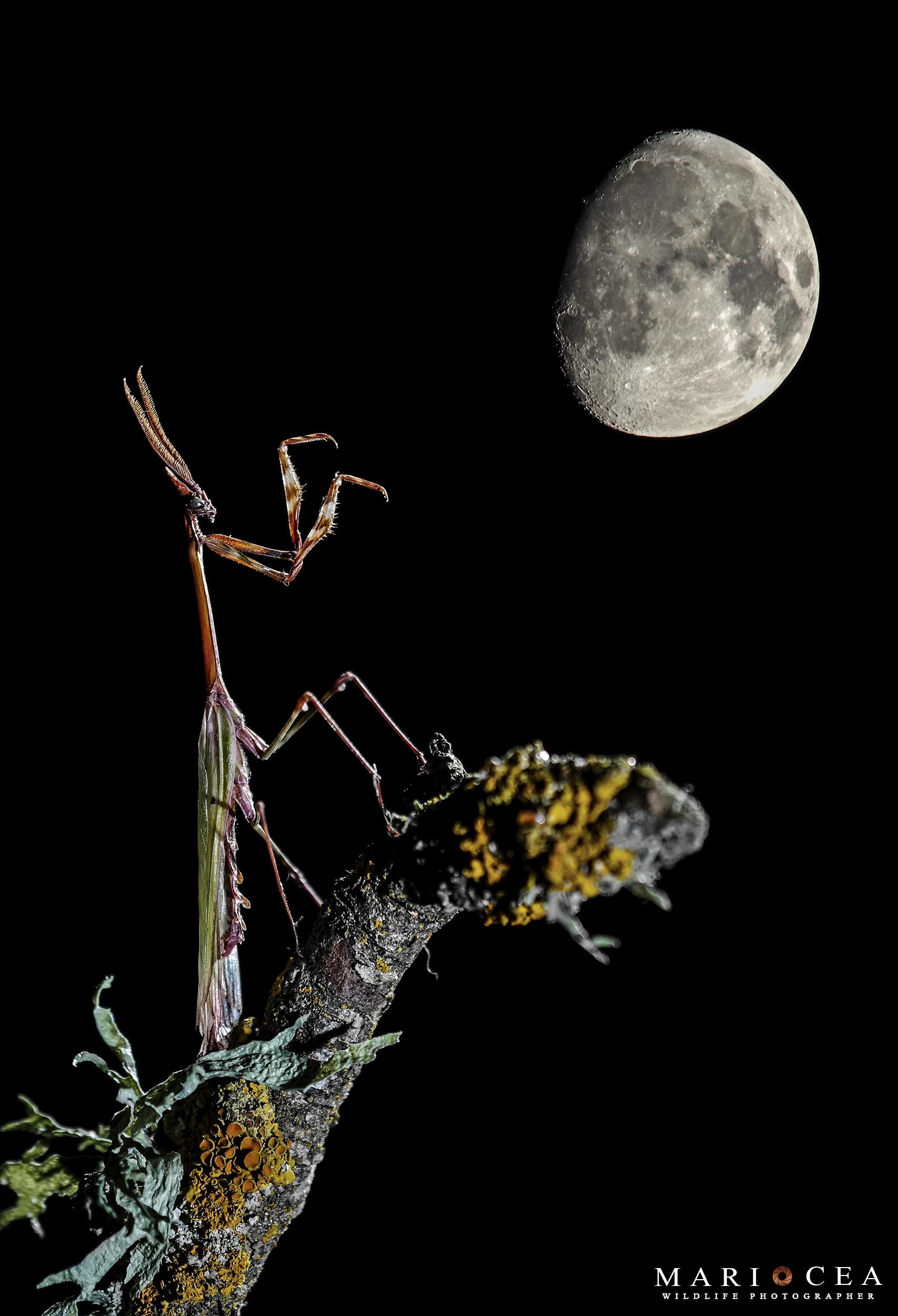 Foto de Fotografías de naturaleza tomadas por Mario Cea (7/12)