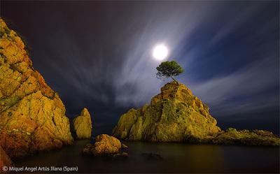 Wildlife Photographer of the Year 2012: Ya se conocen los ganadores, entre ellos varios fotógrafos españoles
