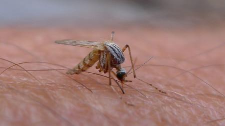 ¿Qué es el virus Zika? ¿Por qué es tan peligroso?
