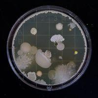 El gen del sur de asia que viajó hasta una isla aislada perdida en el Ártico: la resistencias antibióticas parecen imparables