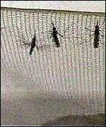 Mosquiteras contra la malaria