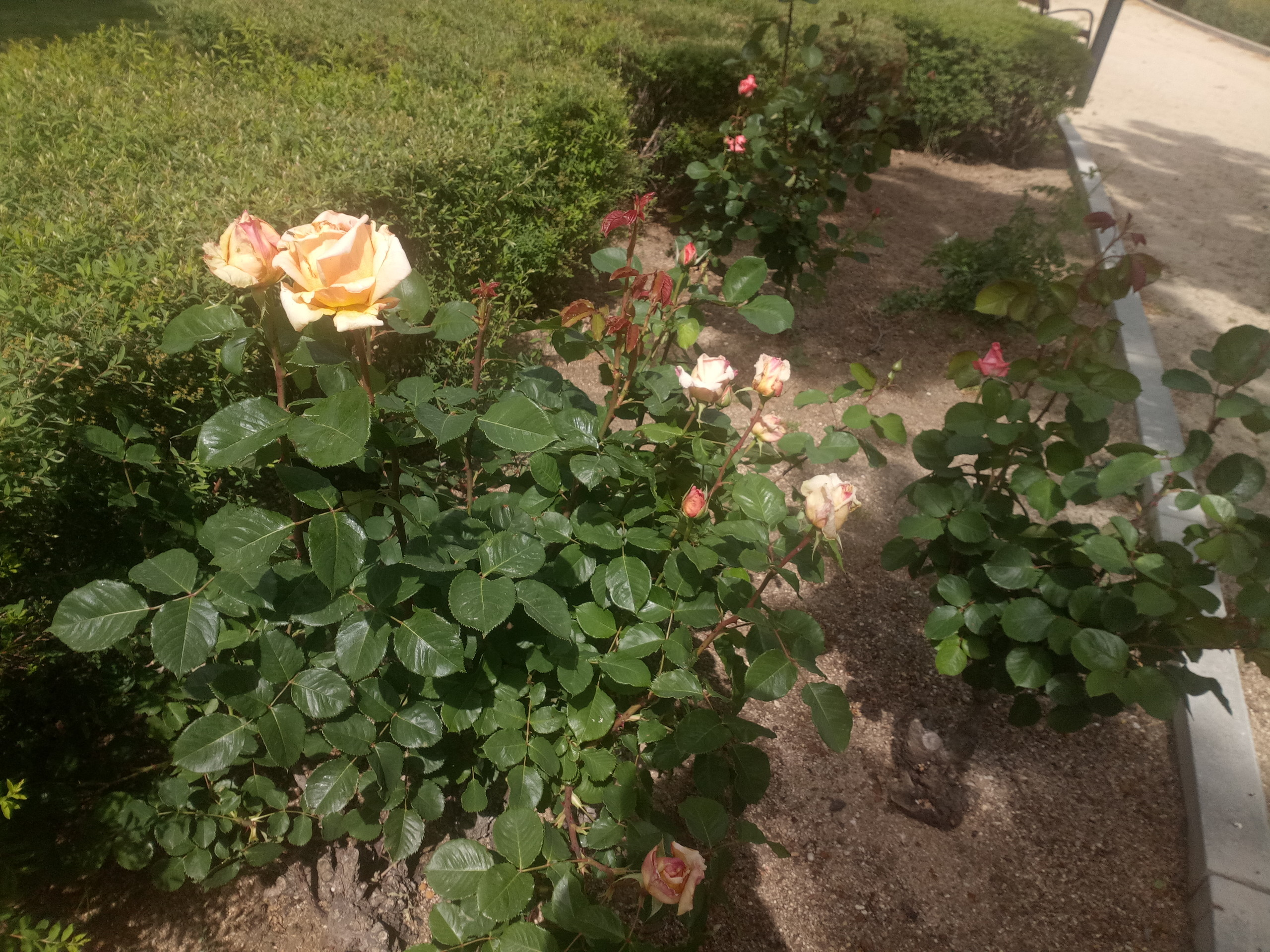 Foto de Fotos Nubia M2 Lite (10/16)