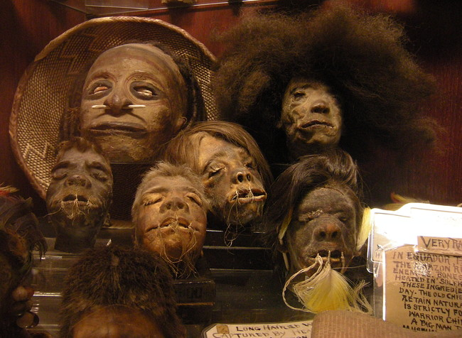Seattle Curiosity Shop Shrunken Heads 02a