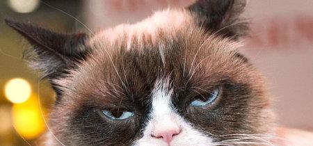 ¿Puede un gato secuestrar tu Android a distancia? Sí, si es ransomware
