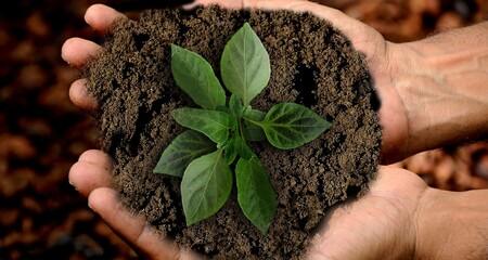 10 tips para tener una alimentación sostenible y ecológica