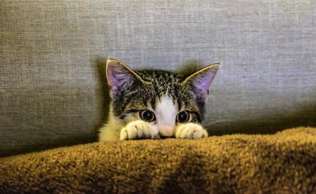 Como Fotografiar Mascotas I Gatos 13
