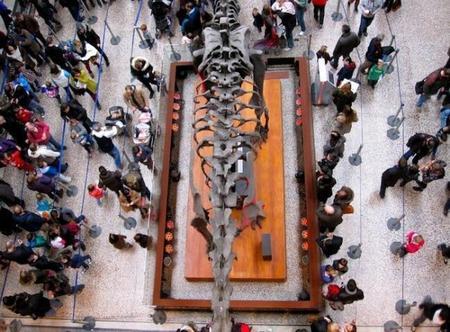 Visita al Museo de Historia Natural en Londres, ideal para niños