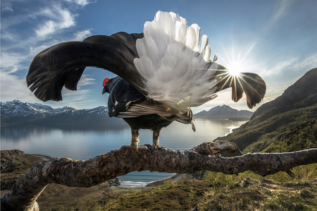 Estas son las imágenes ganadoras del certamen BigPicture: Natural World Photography 2019, concurso de fotografía de naturaleza