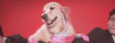 Vincent Flouret, el fotógrafo que ha recreado con su perrete algunas de las imágenes más icónicas de Madonna