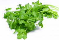 El cilantro, sus usos y propiedades