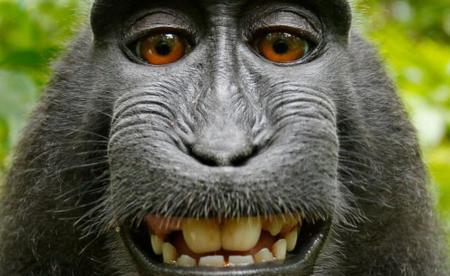 Si un mono se hace un Selfie ¿quién es el propietario de la foto?