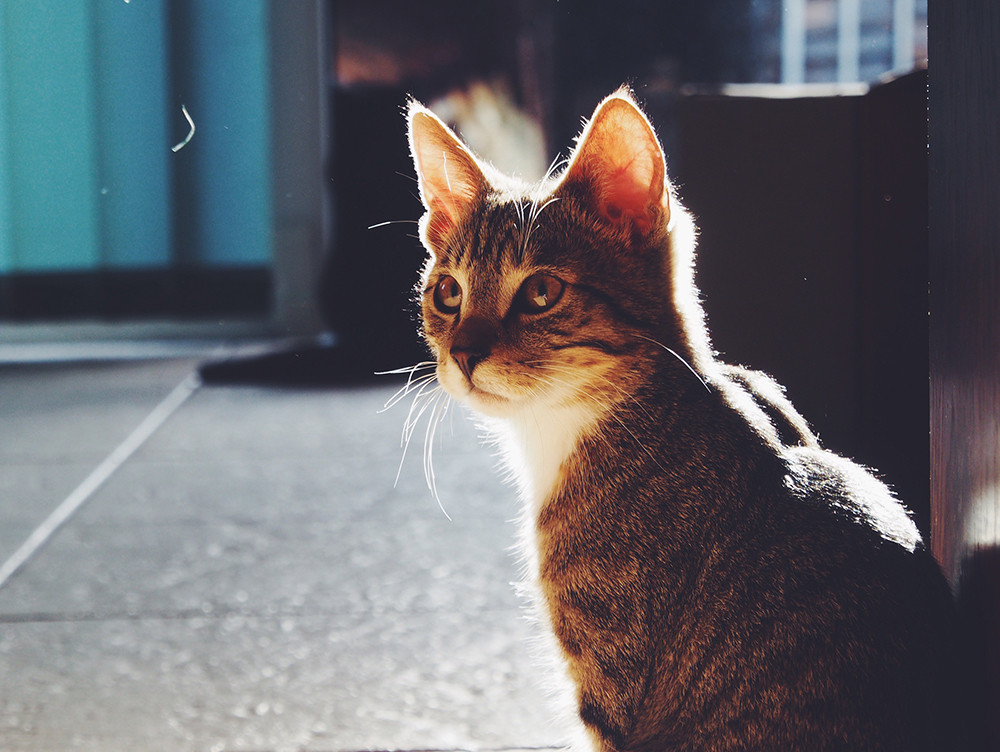 Como Fotografiar Mascotas I Gatos 7