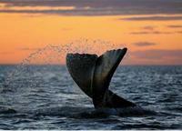 Los mejores lugares del mundo para avistar ballenas