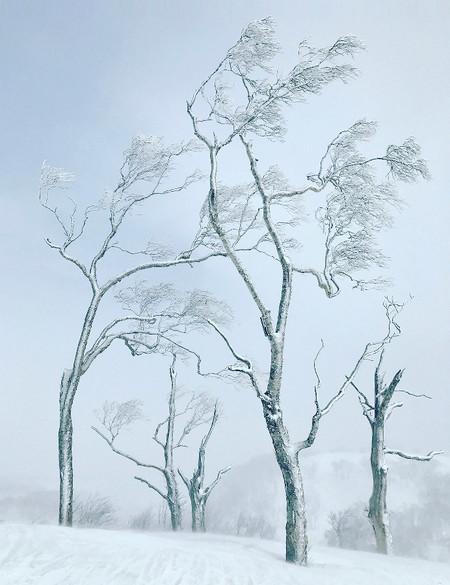 Tree Stephen King 5902