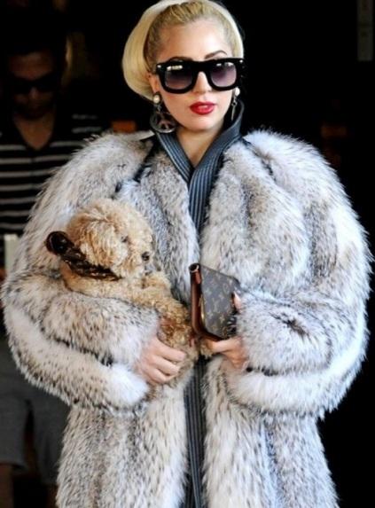 Los de PETA echan toda la peta a Lady Gaga