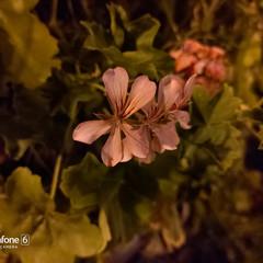 Foto 126 de 180 de la galería fotos-tomadas-con-el-asus-zenfone-6 en Xataka