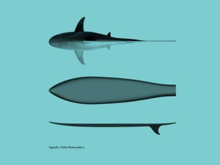 Si eres surfero, mejor que te confundan con un tiburón gracias a la tabla Surfph-o-morph