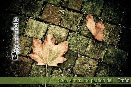 Saca el máximo partido del otoño