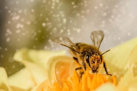 Las auténticas beneficiadas por el comunismo cubano han sido... las abejas