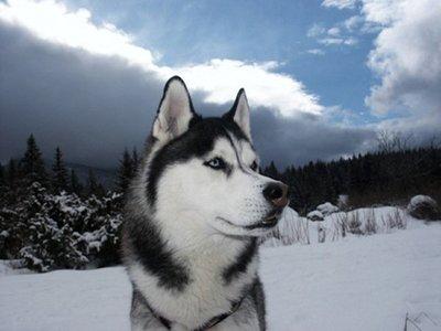 La primera persona que murió por intoxicación de vitamina A lo hizo por comerse un perro