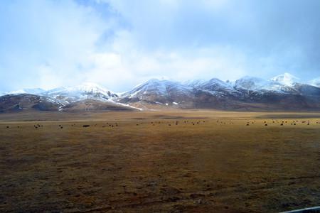 tibet-altiplano