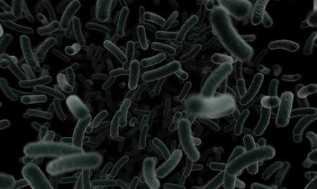 Las bacterias que alberga la vagina cambian con el tiempo
