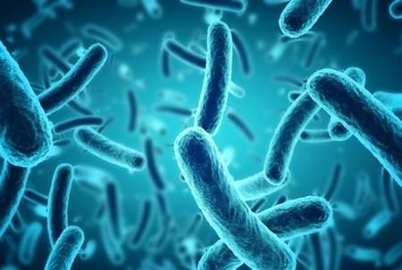 Europa puede aumentar su número de patógenos debido al Calentamiento Global
