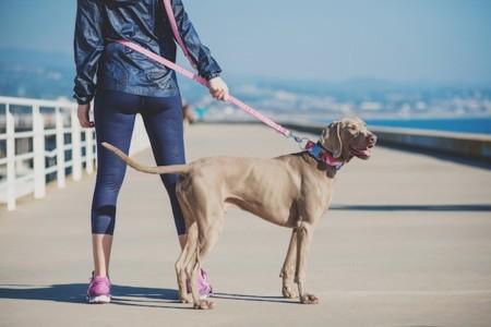 Tu perro se pondrá en forma a tu lado e irá a la moda