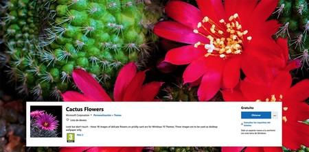 Cactus Copia
