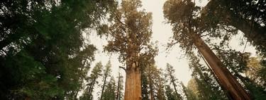 Hay diez veces más árboles en la Tierra de lo que se había creído