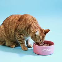 Sustitutos de la carne también para mascotas: esta comida para gatos está hecha a base de insectos