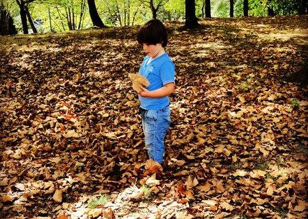Actividades fin de semana: recogiendo hojas de árboles con los niños