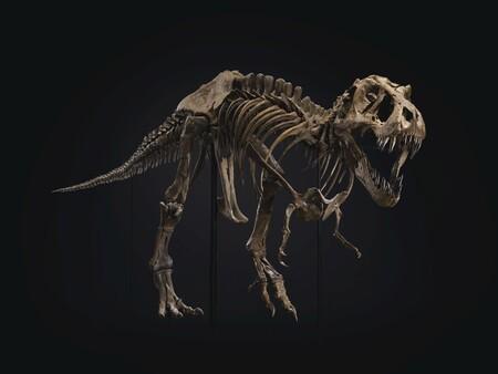 Este fósil de un Tyrannosaurus rex ha sido vendido por más de 30 millones de dólares: ¿los fósiles deben tener precio?