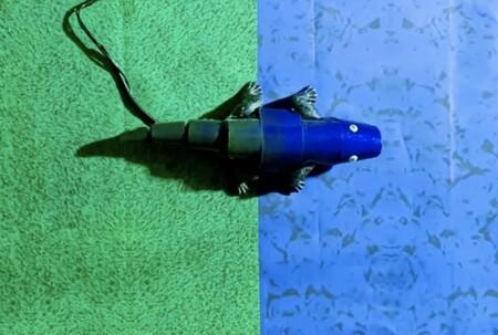 Este robot no sólo imita la forma de los camaleones, también su capacidad de cambiar de color según el entorno