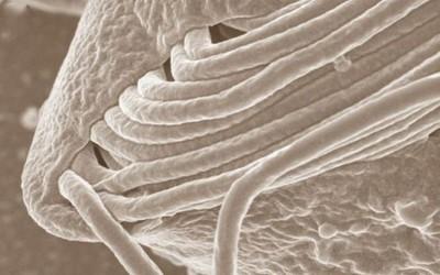 Descubren un nuevo microorganismo al que llaman 'Cthulhu'