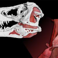 Ésta es la fuerza que ejercían las fauces del Tiranosaurio rex