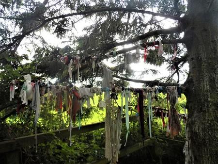 Clottie Wells: ¿por qué hay ropa colgada en algunos bosques?
