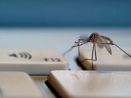 La rapidez a la que se expande un virus informático (I)