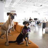 Algunas empresas están empezando a incluir beneficios para el cuidado de mascotas como si de hijos se trataran
