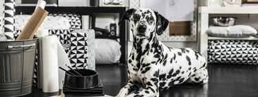 9 Consejos de Ikea para que nuestras mascotas también sean felices durante el confinamiento