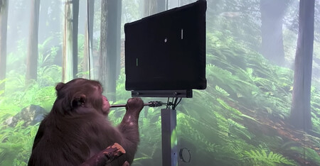 Este mono puede jugar al Pong con su mente gracias a los implantes cerebrales Neuralink de Elon Musk