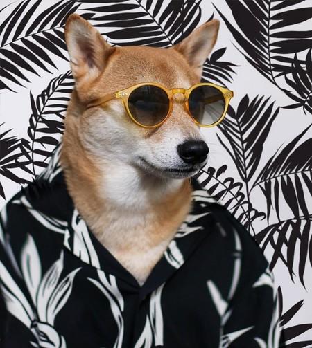 En el nuevo año chino dedicado al perro, recordamos los mejores looks de nuestro favorito: MenswearDog