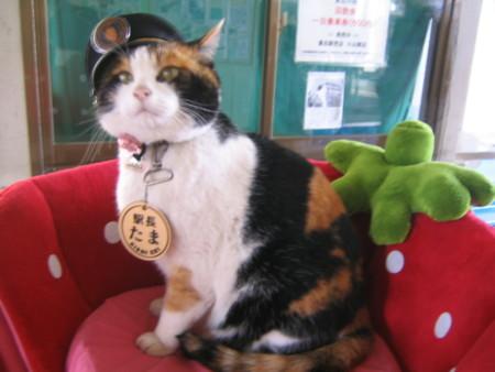Station Master Tama